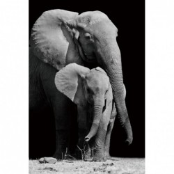 Elephant & Calf - Safari -...