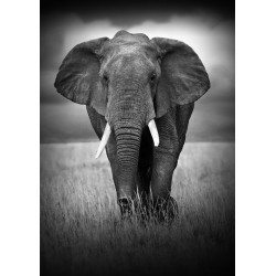 Glass wall art - Black and White African Elephant