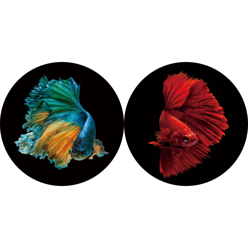 Round glass wall art - coloured Fish - set of two
