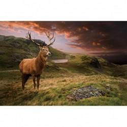 Stag Scottish Highlands...