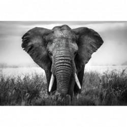 African Elephant - 120cm x...