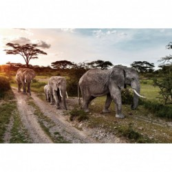 Herd of Elephants - 100cm x...