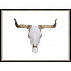 Bulls Skull - Glass Frame...